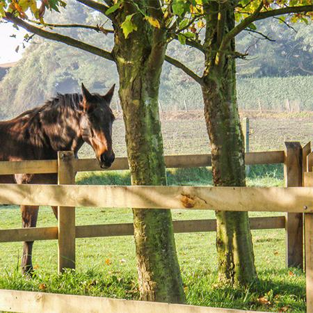 Afsluiting paarden 450