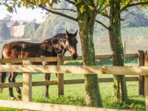paardenafsluiting 1